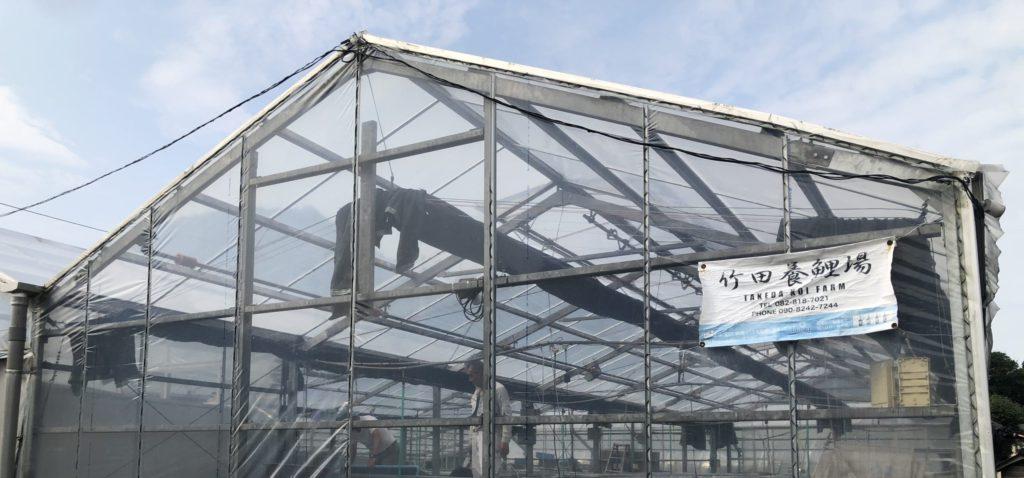 新展示池 New Pond for Nishikigoi Exhibition